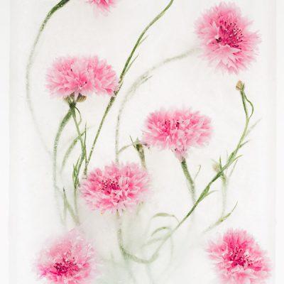 Dreamy pink cornflowers