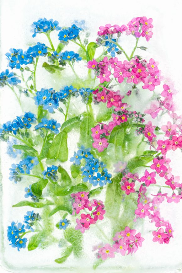 Forget me or Forget me not!